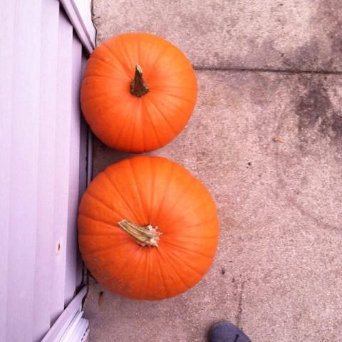 pumpkins | respite